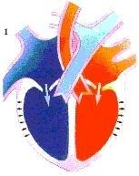 hart11