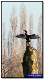 AalscholverUffelse beek