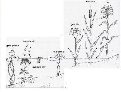 waterplanten3