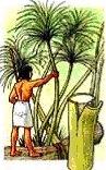 papyrus snijden